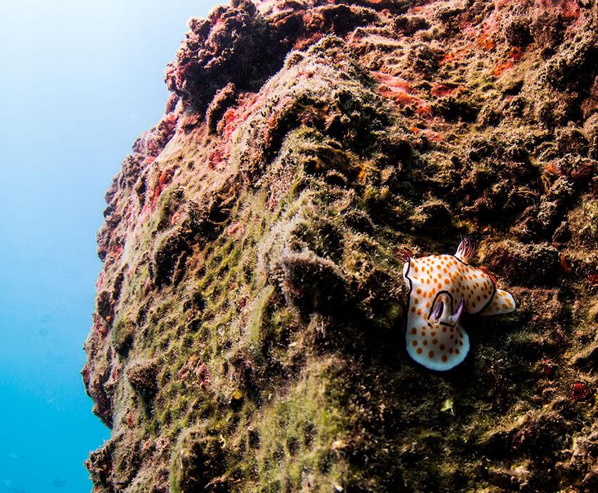 nudibranch_image (1)